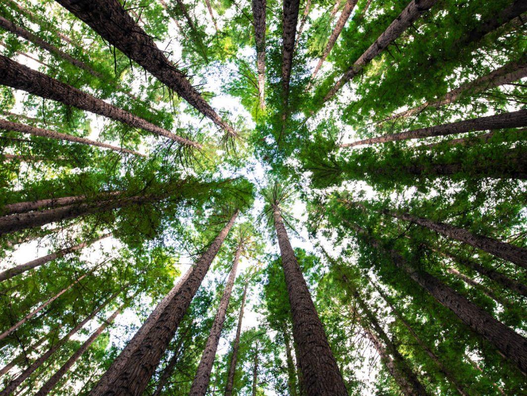 Ecosia, browser che pianta alberi