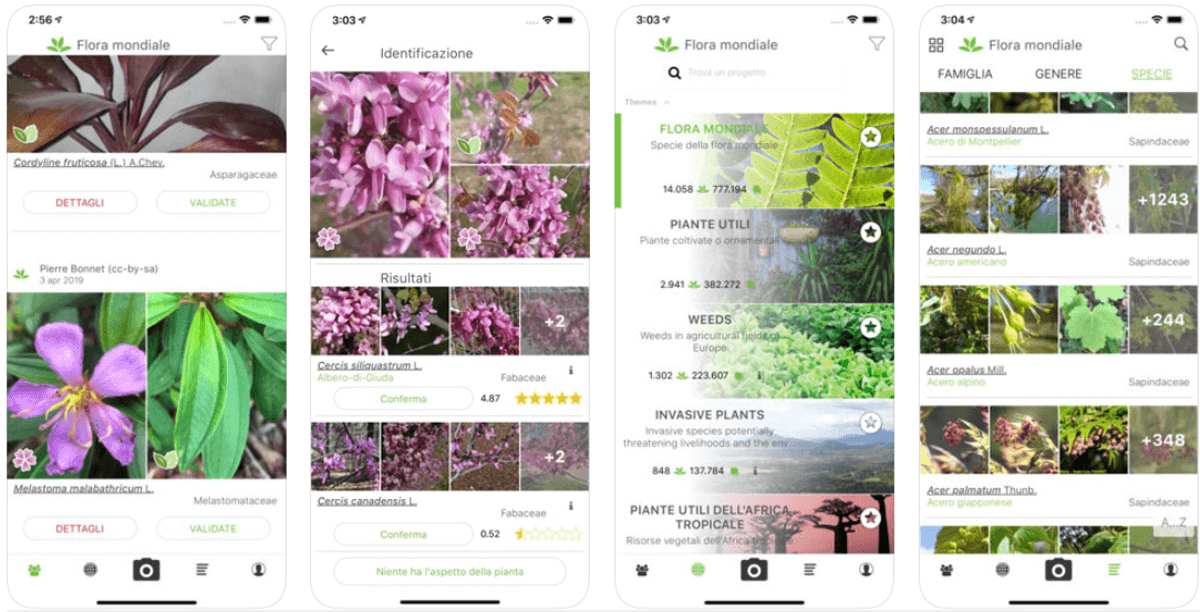 PlantNet, lo Shazam delle piante